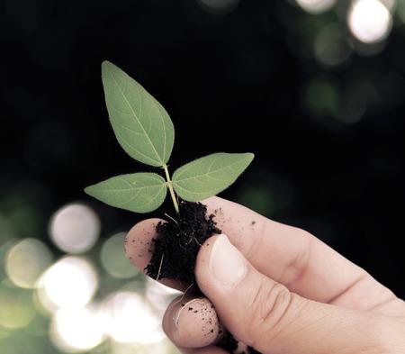 Hand holding plant on bokeh background Stock Photo