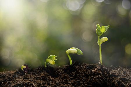segmento: Planta joven que crece en la luz de la mañana y el fondo verde del bokeh, nuevo crecimiento de la vida concepto de la ecología