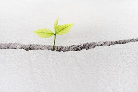Beautiful small tree plant grow on cracked street , new life growth ecology development business financial concept