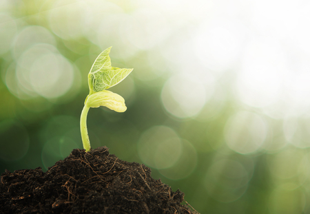Young plant growing in the morning light and green bokeh background Archivio Fotografico