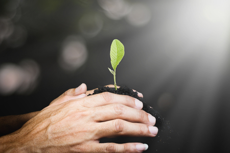 Hand of man seeding small plant or seedling on pile of soil on green bokeh dark background sun light nature , planting young tree , ecology growth concept