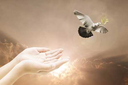 Hand releasing a bird into the air on sky background ,  beauty ,freedom,peace ,spirituality,new year concept