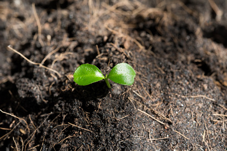 Little plant growing seed in soil background on top view new life growth ecology concept Zdjęcie Seryjne