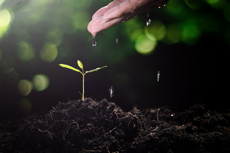 Hand of man watering small plant on nature green bokeh background seeding ecology growth new life concept Foto de archivo - 112896206