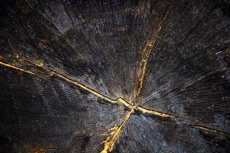 Background texture black  a tree cutoff. Grunge stile photo