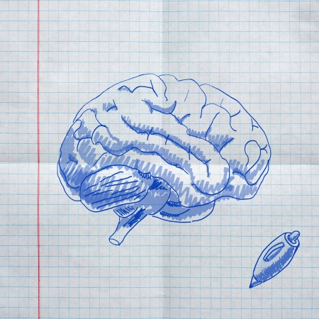 school sketches on checkered paper, brain photo