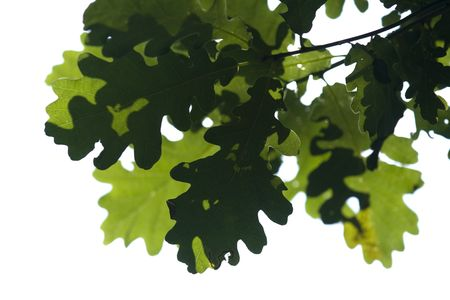 Green leaves Stock Photo - 3787117