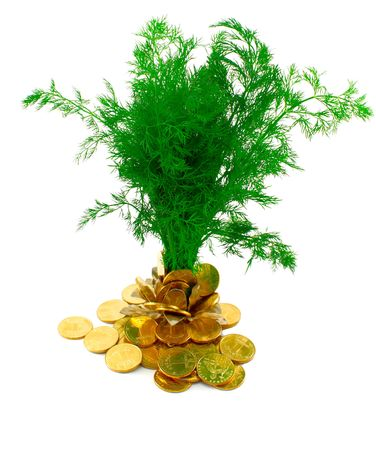 Green tree growing from heap of coins Stock Photo