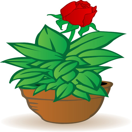 potting soil: illustration a flowerpot with a rose flower on a white background