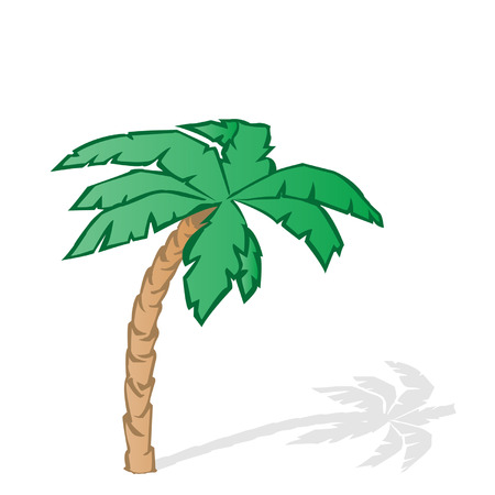 illustration a green tropical palm tree on a white background Stock Vector - 7672407