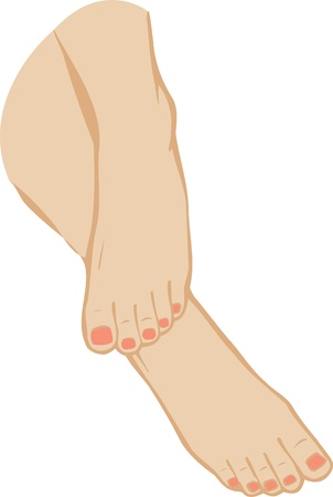 woman legs: Vector illustration of a foot of feet on a white background  Illustration