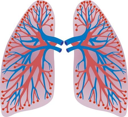 longen van de persoon