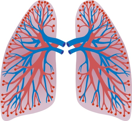 body painting: lungs of the person