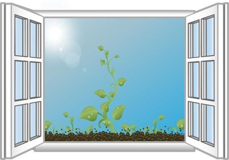 window open: Ilustraci�n vectorial verde brotes en una ventana abierta