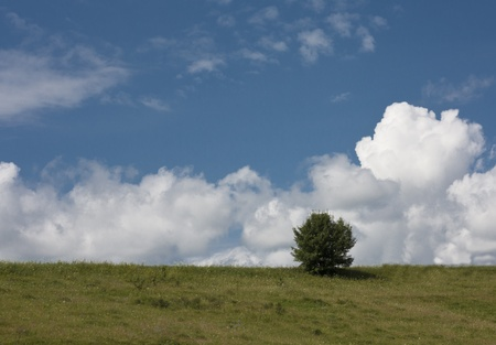Fine landscape a tree on a lawn against the sky and clouds Stock Photo