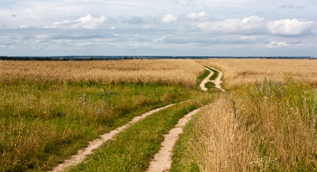 Fine landscape rural road leaving in fields of wheat against the sky Stock Photo - 10075275