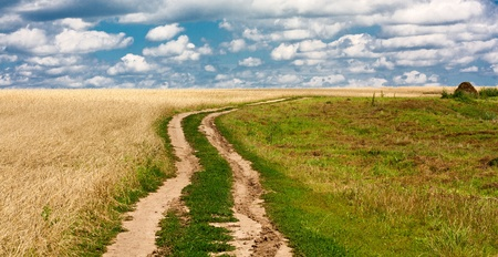 Fine landscape rural road leaving in fields of wheat against the sky Stock Photo
