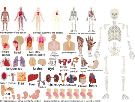 set of an internal of the person Иллюстрация