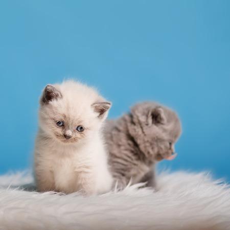 cute kittens: kitten babys cat animal small