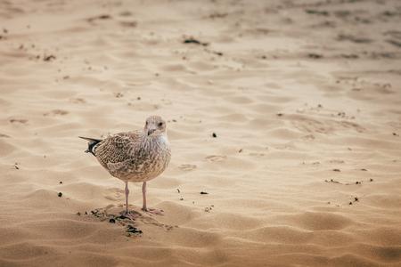 sea netherlands sand lighthouse beach Stockfoto