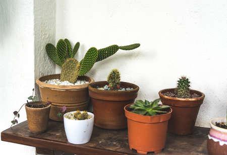 Cactus and succulent in a pot at the floral shop, soft selective focus, film grain noise Standard-Bild