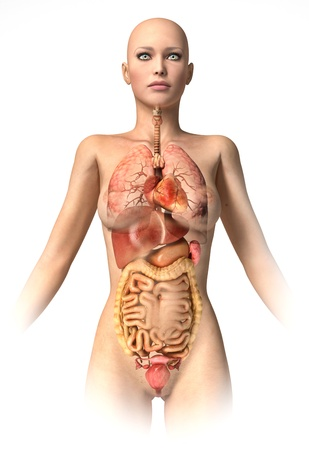 sigmoid colon: Woman body  with interior organs superimposed. Anatomy image. Stock Photo