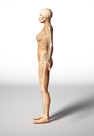 Naked woman standing on floor, with bone skeleton superimposed, viewed from a side.  Stock Photo