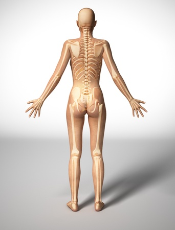Naked woman standing on floor, viewed from the back, with bone skeleton superimposed.  photo