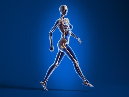 X ray cercando di rendering 3D di donna nuda, a piedi sul pavimento, con scheletro osseo sovrapposto, su sfondo blu. photo