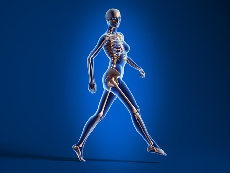 X ray looking 3D rendering of naked woman, walking on floor, with bone skeleton superimposed, on blue background. photo