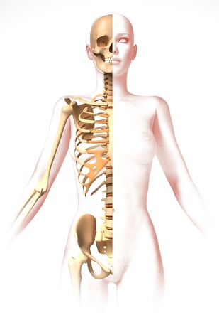 medicine chest: Woman body, with skeleton. Anatomy image, stylized look. Clipping path included.