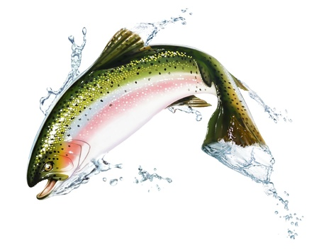 fish isolated: Fish jumping out of the water, with some splashes. Photorealistic airbrush illustration, on white background. Clipping path included.
