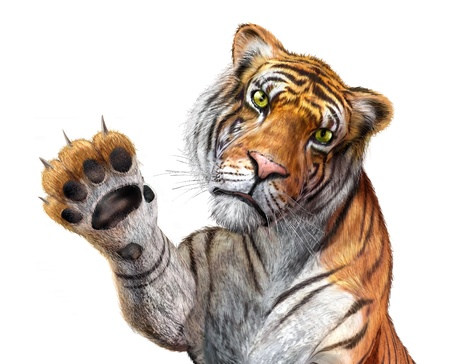 Tiger close up, facing the viewer, with the right hand up and claws.  photo