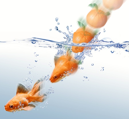 morphing: mandarin splashing into water and transforming in a gold fish