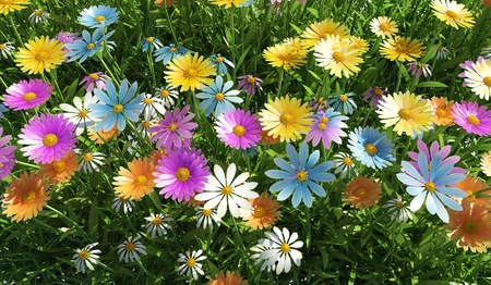 Close up view of a grass filed, plenty of multicolored flowers, viewed from the top. photo