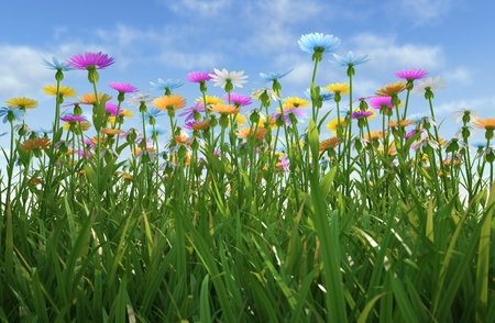 yellow wildflowers: Close up view of a grass filed, plenty of multicolored flowers, viewed from a side with close grass.