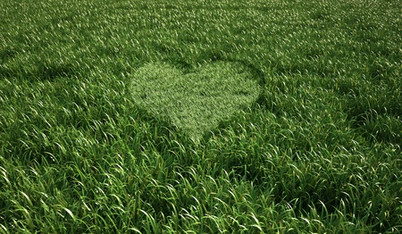 Grass meadow, bird eye view, with a heart shape cut grass in the middle. photo