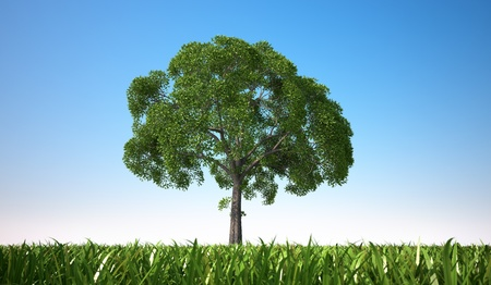Isolated close up of a tree in a grass field, centered in the scene, viewed from a low point of view, with close grass. photo