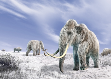 Two mammoth in a field covered with snow, with some bushes and a few bisons  Blue sky with clouds on the background