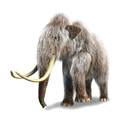 Photo realistic 3 D rendering of a Mammoth  On white background  photo