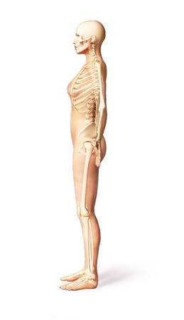 Naked woman standing on floor, with bone skeleton superimposed, viewed from a side  With clipping path included