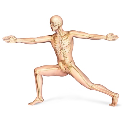 strong skeleton: Human male in athletic dynamic posture, with full skeleton superimposed  On white background, with clipping path included
