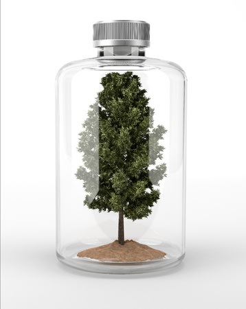 peace risk: Tree inside a glass bottle  On white background with clipping path included  Stock Photo