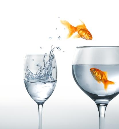 peces de colores: Peces de oro sonriente que salta de un vaso de agua, con una más grande, donde otro pez está esperando. En el fondo blanco. Foto de archivo
