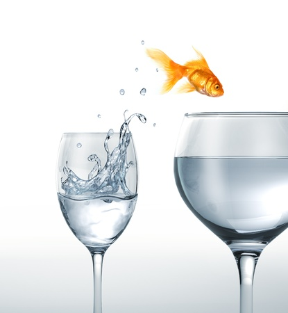 larger: Gold fish jumping from a glass of water, to a larger one. On white background. Stock Photo