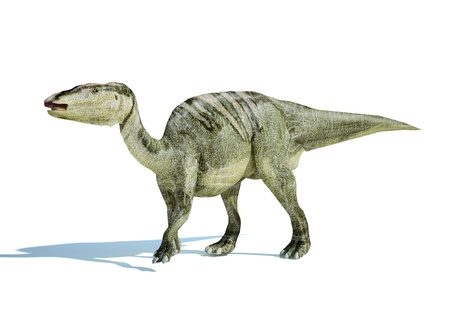 Photorealistic 3 D rendering of an Edmontosaurus. On white background with drop shadow and clipping path included.