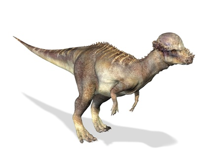 bipedal: Photorealistic 3 D rendering of a Pachycephalosaurus. On white background with drop shadow and clipping path included.