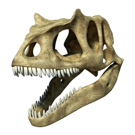 strong skeleton: Photorealistic 3 D rendering of an Allosaurus skull. On white background with clipping path included.