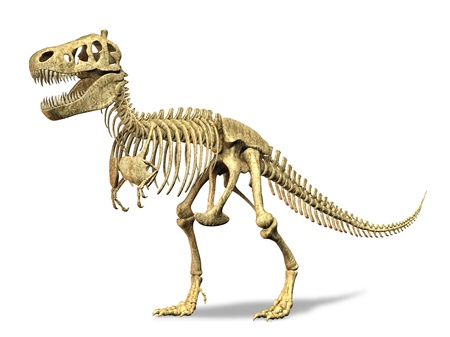 T-Rex skeleton. on white background. Clipping path included. photo