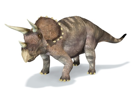 Photorealistic 3 D rendering of a Triceratops. On white background with drop shadow and clipping path included.